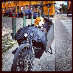 Everyone travels by bike!